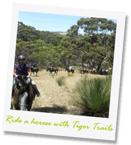 Tiger-trails