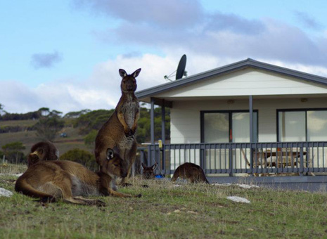Cottage Waves & Wildlife - Accommodation Kangaroo Island